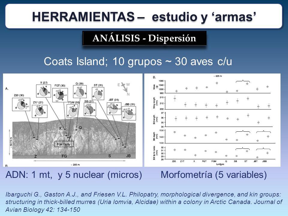 ANÁLISIS - Dispersión Coats Island; 10 grupos ~ 30 aves c/u ADN: 1 mt, y 5 nuclear (micros)Morfometría (5 variables) Ibarguchi G., Gaston A.J., and Fr