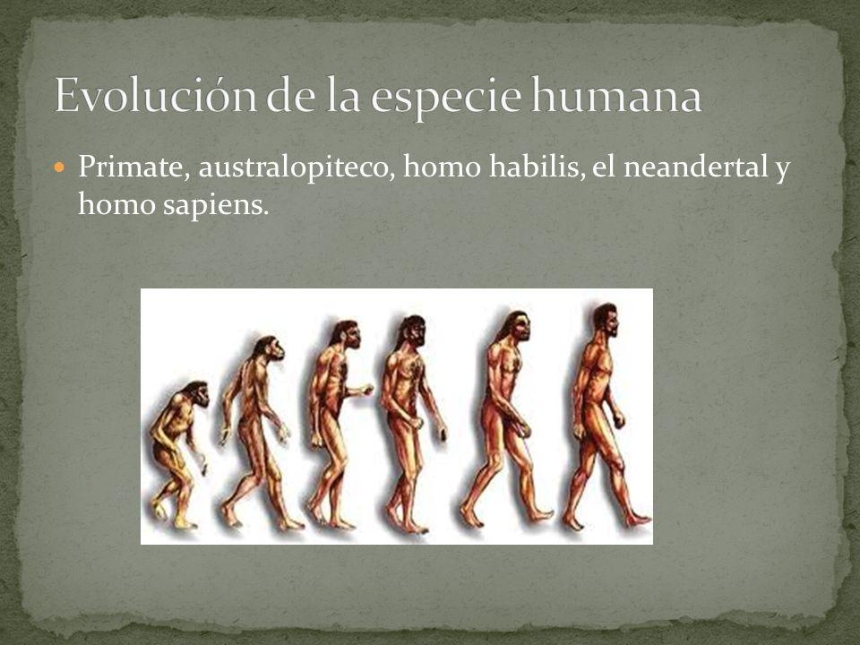 Primate, australopiteco, homo habilis, el neandertal y homo sapiens.