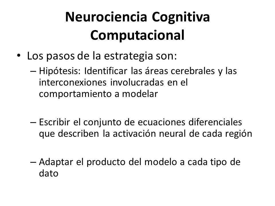 Neurociencia Cognitiva Computacional Los pasos de la estrategia son: – Hipótesis: Identificar las áreas cerebrales y las interconexiones involucradas