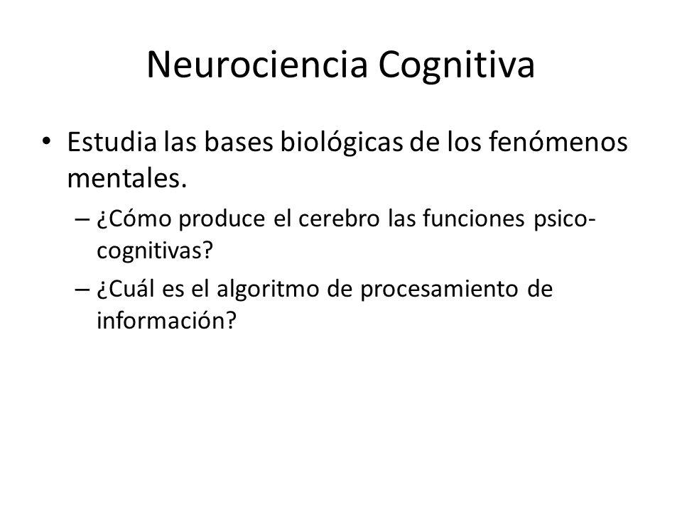 Neurociencia Cognitiva Estudia las bases biológicas de los fenómenos mentales. – ¿Cómo produce el cerebro las funciones psico- cognitivas? – ¿Cuál es