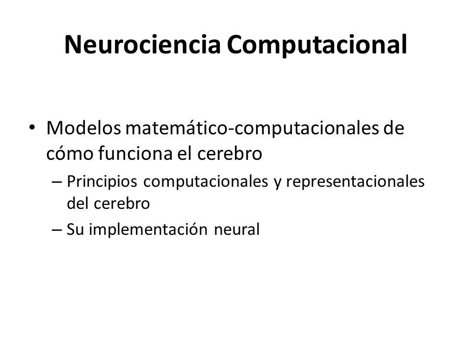 Neurociencia Cognitiva Computacional Conexionismo: – los fenómenos mentales son procesos emergentes de redes de unidades más simples Ahora: Modelado más cercano y más amplio de los aspectos biológicos
