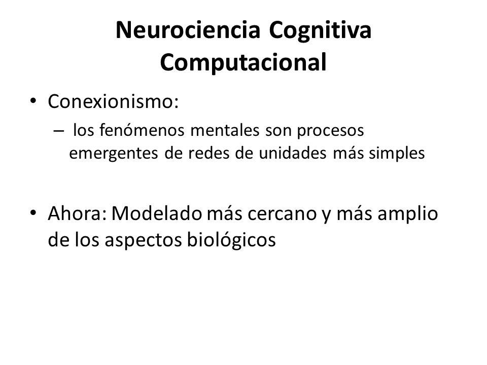 Neurociencia Cognitiva Computacional Conexionismo: – los fenómenos mentales son procesos emergentes de redes de unidades más simples Ahora: Modelado m