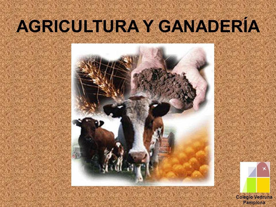 AGRICULTURA Y GANADERÍA Colegio Vedruna Pamplona