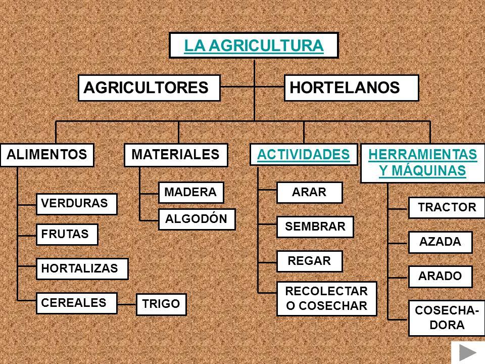 LA AGRICULTURA AGRICULTORESHORTELANOS ALIMENTOS VERDURAS FRUTAS HORTALIZAS CEREALES TRIGO MATERIALES MADERA ALGODÓN ACTIVIDADES ARAR SEMBRAR REGAR RECOLECTAR O COSECHAR HERRAMIENTAS Y MÁQUINAS TRACTOR AZADA ARADO COSECHA- DORA