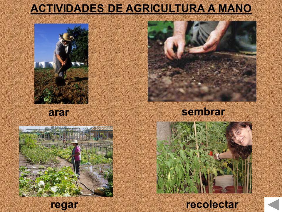 ACTIVIDADES DE AGRICULTURA A MANO arar sembrar regarrecolectar
