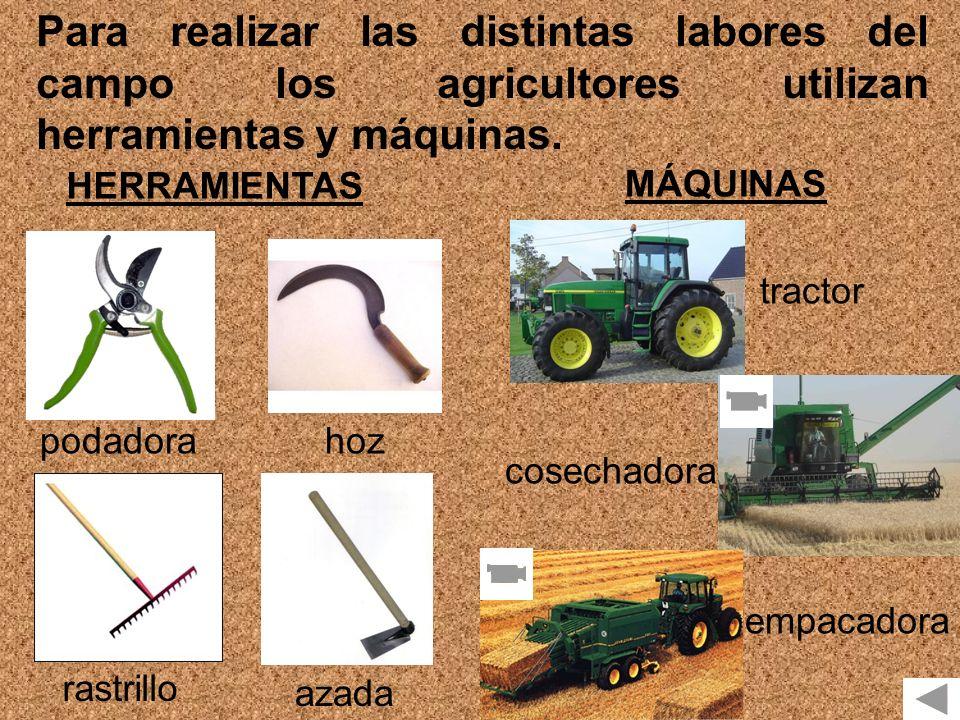 Para realizar las distintas labores del campo los agricultores utilizan herramientas y máquinas. HERRAMIENTAS MÁQUINAS podadorahoz rastrillo azada tra