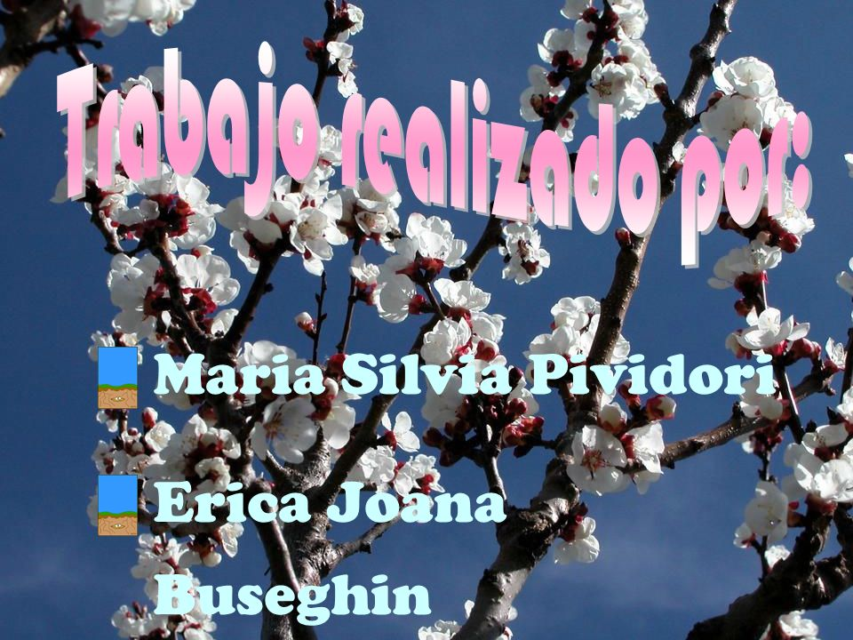 Maria Silvia Pividori Erica Joana Buseghin