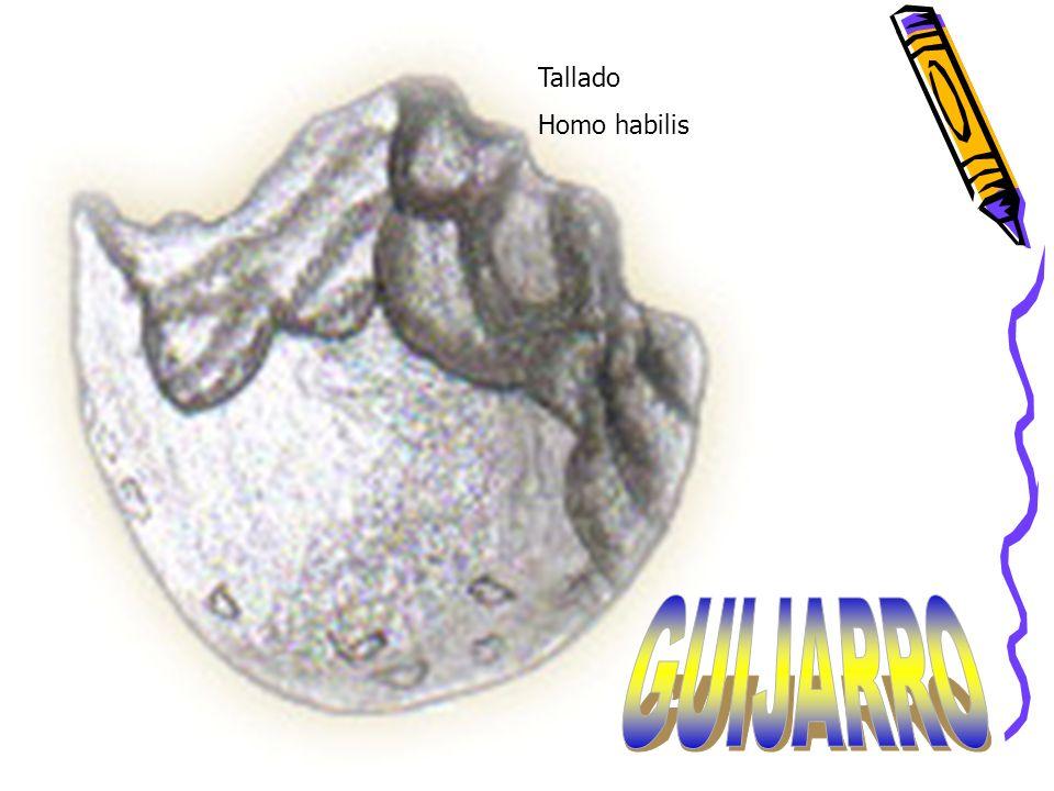 Tallado Homo habilis