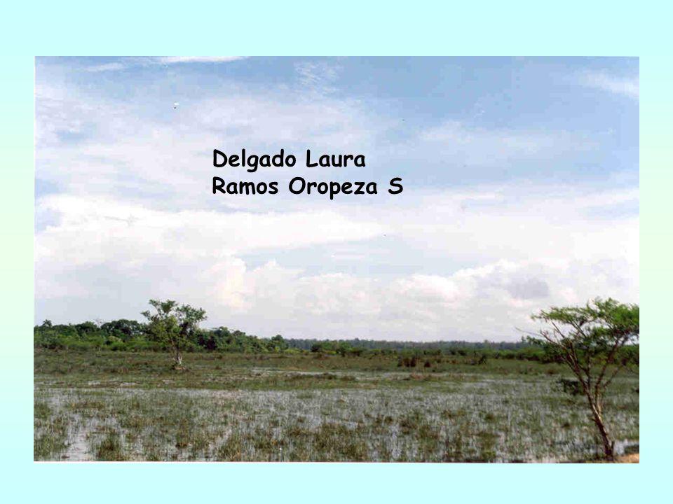 Delgado Laura Ramos Oropeza S
