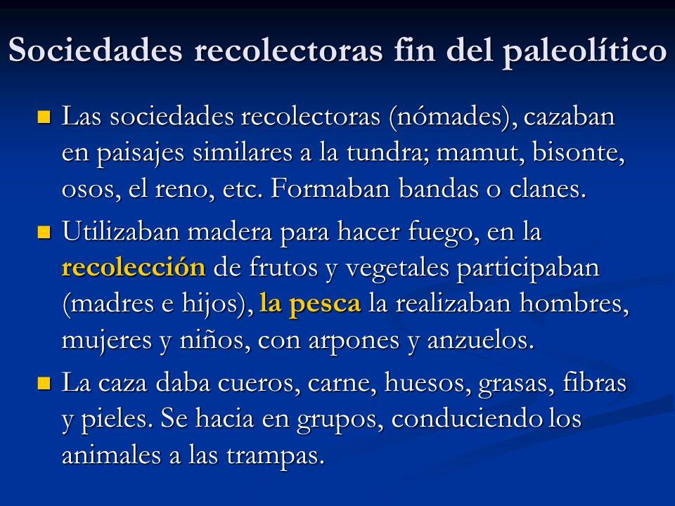 Sociedades recolectoras fin del paleolítico Las sociedades recolectoras (nómades), cazaban en paisajes similares a la tundra; mamut, bisonte, osos, el reno, etc.