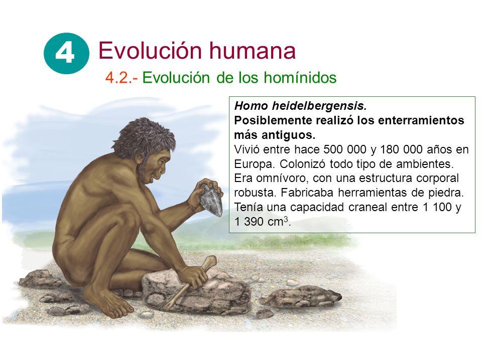 Homo heidelbergensis. Posiblemente realizó los enterramientos más antiguos. Vivió entre hace 500 000 y 180 000 años en Europa. Colonizó todo tipo de a