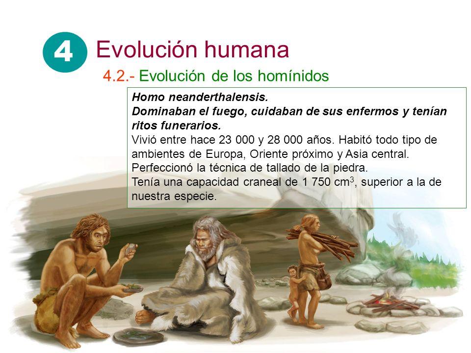 Homo neanderthalensis. Dominaban el fuego, cuidaban de sus enfermos y tenían ritos funerarios. Vivió entre hace 23 000 y 28 000 años. Habitó todo tipo