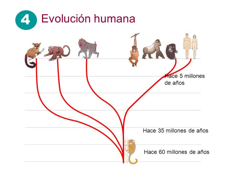 Hace 60 millones de años Hace 35 millones de años Hace 5 millones de años 4 Evolución humana