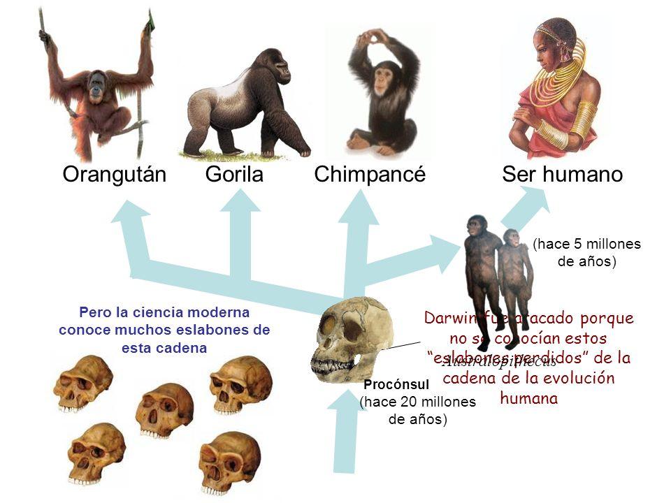 Orangután Gorila Chimpancé Ser humano ? ? Darwin fue atacado porque no se conocían estos eslabones perdidos de la cadena de la evolución humana Pero l
