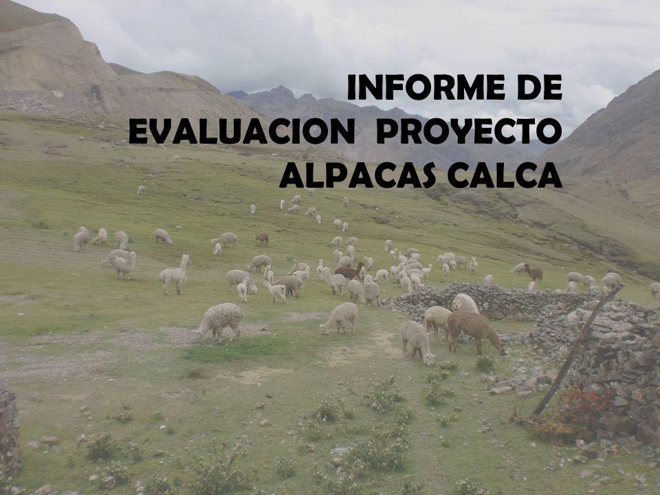 familias que crían alpacas cuentan con medios de almacenamiento de forraje Presupuesto re-direccionado Meta menor – datos recogidos de la entrevista 01901