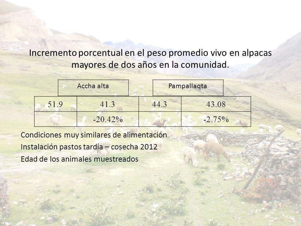 Incremento porcentual en el peso promedio vivo en alpacas mayores de dos años en la comunidad. Condiciones muy similares de alimentación Instalación p