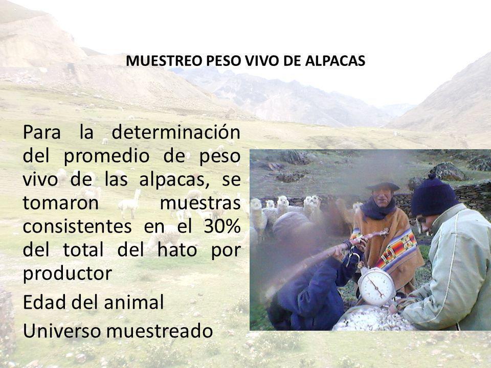 MUESTREO PESO VIVO DE ALPACAS Para la determinación del promedio de peso vivo de las alpacas, se tomaron muestras consistentes en el 30% del total del