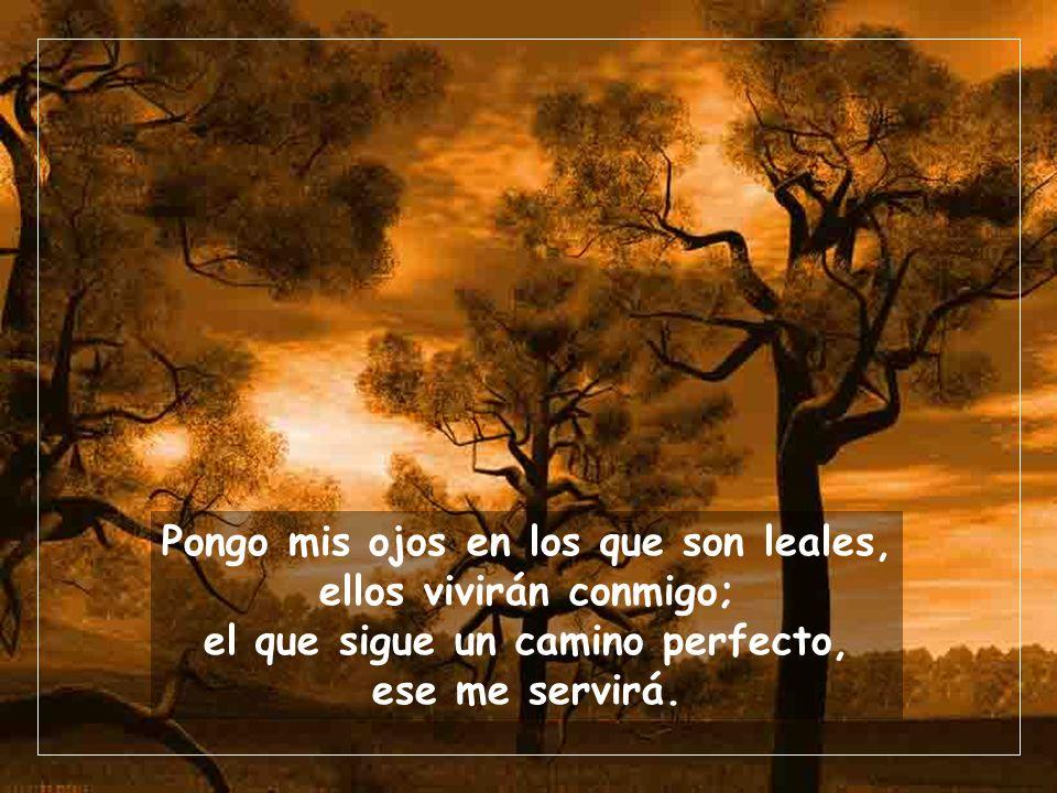 Pongo mis ojos en los que son leales, ellos vivirán conmigo; el que sigue un camino perfecto, ese me servirá.