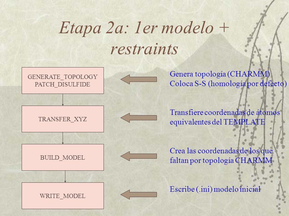 Etapa 2a: 1er modelo + restraints GENERATE_TOPOLOGY PATCH_DISULFIDE Genera topología (CHARMM) Coloca S-S (homología por defecto) TRANSFER_XYZ Transfiere coordenadas de átomos equivalentes del TEMPLATE BUILD_MODEL Crea las coordenadas de los que faltan por topología CHARMM WRITE_MODEL Escribe (.ini) modelo inicial