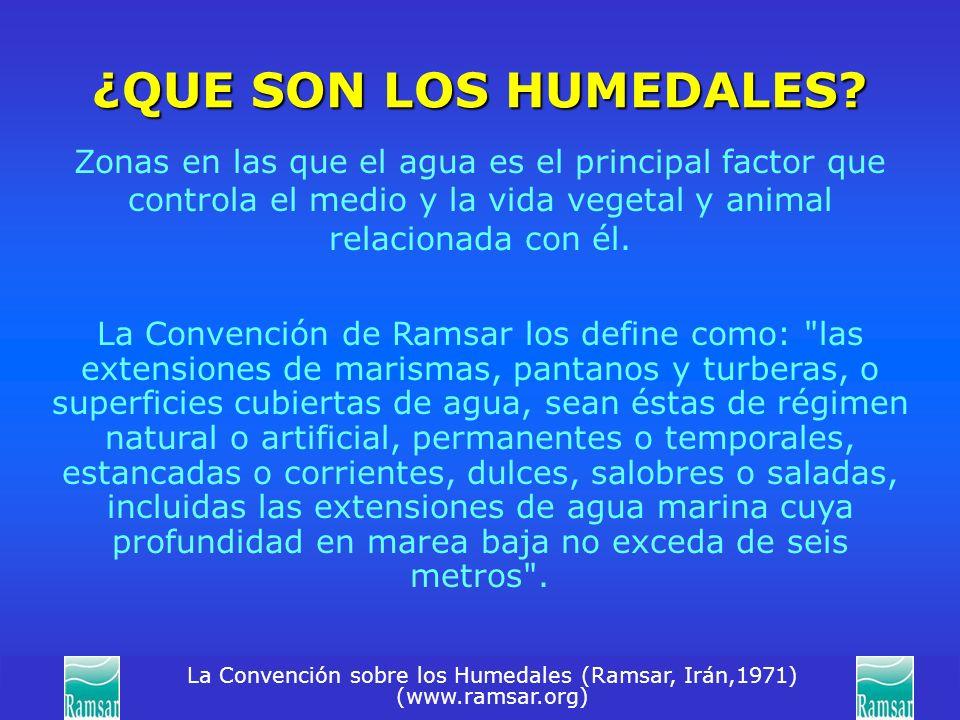 La Convención sobre los Humedales (Ramsar, Irán,1971) (www.ramsar.org) ¿QUE SON LOS HUMEDALES? Zonas en las que el agua es el principal factor que con