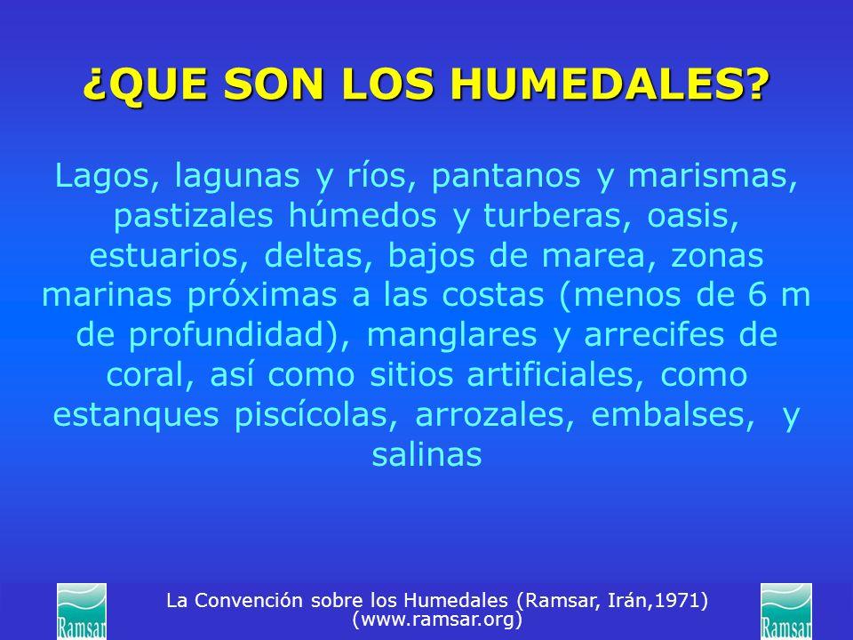 La Convención sobre los Humedales (Ramsar, Irán,1971) (www.ramsar.org) ¿QUE SON LOS HUMEDALES? Lagos, lagunas y ríos, pantanos y marismas, pastizales