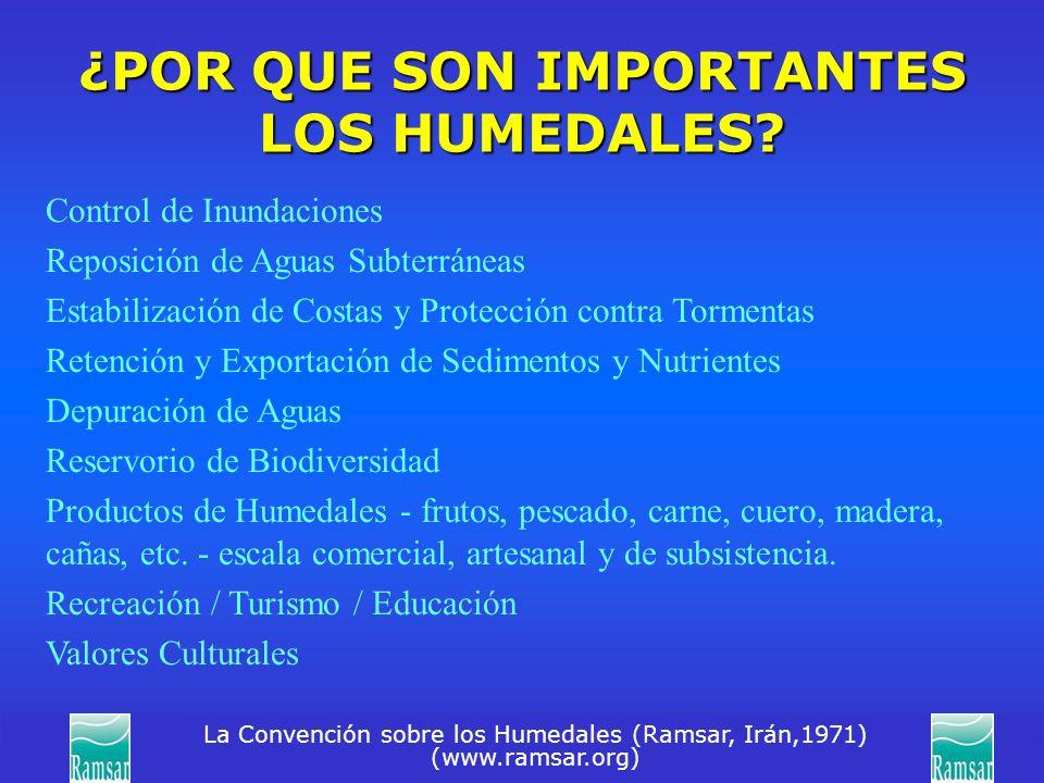 La Convención sobre los Humedales (Ramsar, Irán,1971) (www.ramsar.org) ¿POR QUE SON IMPORTANTES LOS HUMEDALES? Control de Inundaciones Reposición de A