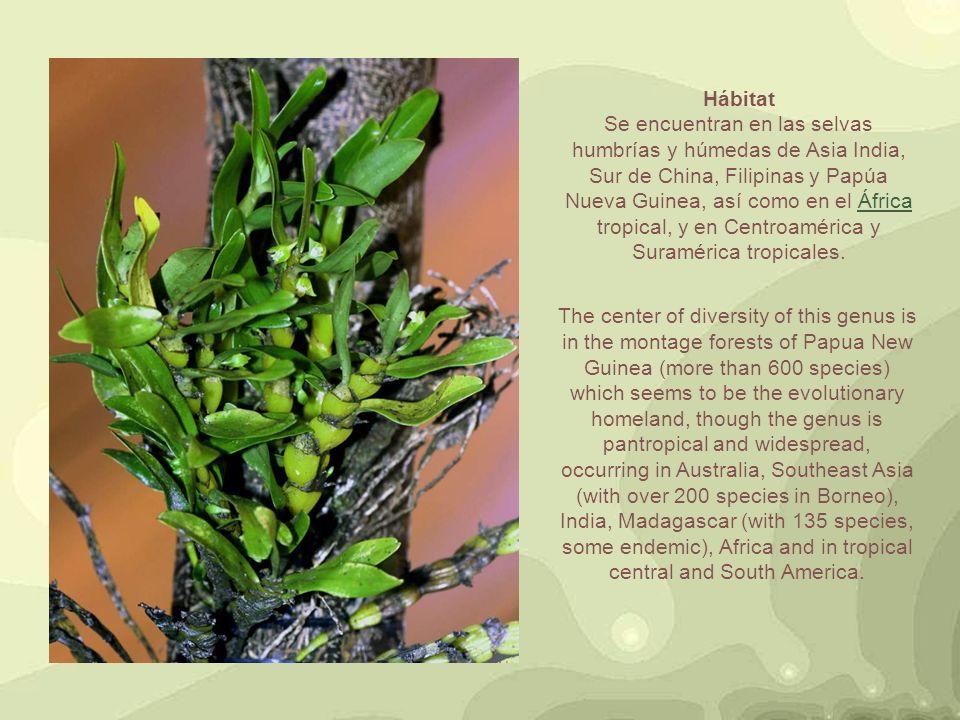 קלריטה ואפרים הנכם מוזמנים להיכנס לאתר שלנו: www.clarita-efraim.com נשמח לתגובות מקורות: http://en.wikipedia.org/wiki/Bulbophyllum http://es.wikipedia.org/wiki/Bulbophyllum http://es.wikipedia.org/wiki/Anexo http://www.orchidphotos.org/images/orchid http://www.pbase.com/glazemaker/bulbo https://www.google.co.il/search?um= http://cyber-raga.blogspot.co.il/2011/07 http://es.encydia.com/pt/Bulbophyllum http://www.bulbophyllum.com/ http://www.asiaticgreen.com/orchids_bulb http://www.bulbophyllum.at/index http://www.bulbophyllum.com/