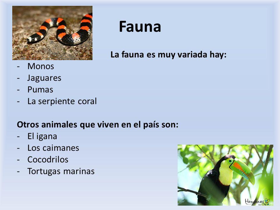 Fauna La fauna es muy variada hay: -Monos -Jaguares -Pumas -La serpiente coral Otros animales que viven en el país son: -El igana -Los caimanes -Cocod