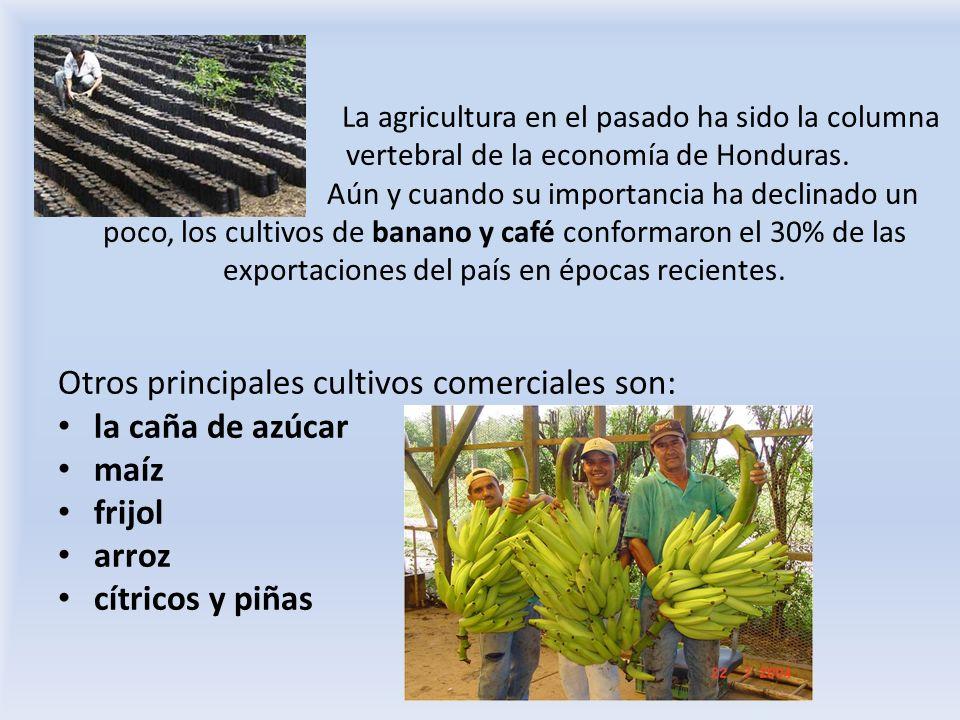 La agricultura en el pasado ha sido la columna vertebral de la economía de Honduras. Aún y cuando su importancia ha declinado un poco, los cultivos de