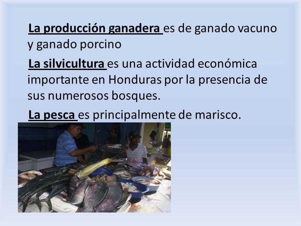 La producción ganadera es de ganado vacuno y ganado porcino La silvicultura es una actividad económica importante en Honduras por la presencia de sus
