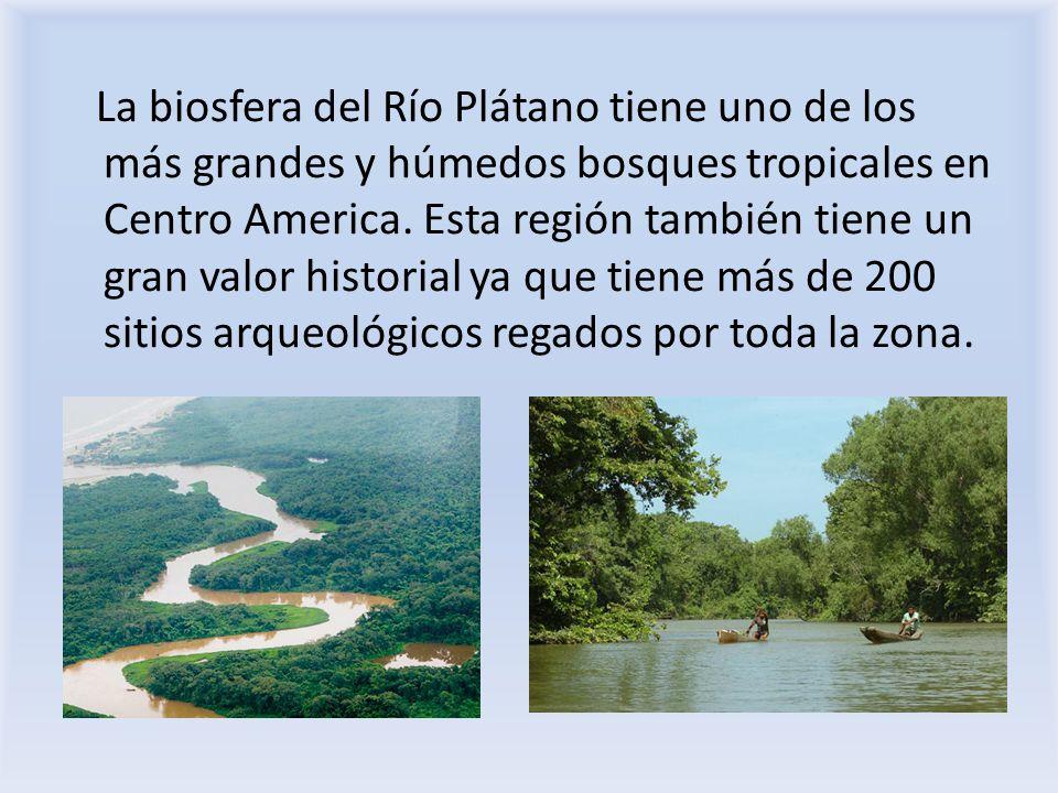 La biosfera del Río Plátano tiene uno de los más grandes y húmedos bosques tropicales en Centro America. Esta región también tiene un gran valor histo