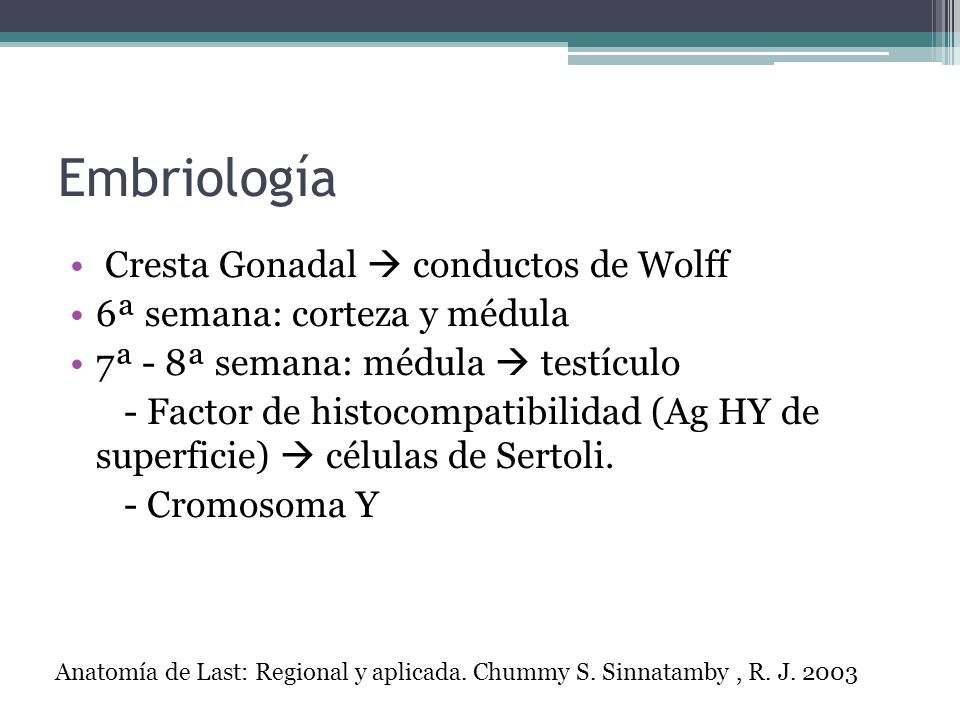 Embriología Cresta Gonadal conductos de Wolff 6ª semana: corteza y médula 7ª - 8ª semana: médula testículo - Factor de histocompatibilidad (Ag HY de s