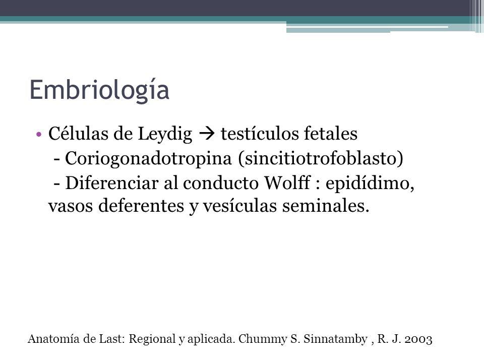 Embriología Células de Leydig testículos fetales - Coriogonadotropina (sincitiotrofoblasto) - Diferenciar al conducto Wolff : epidídimo, vasos deferen