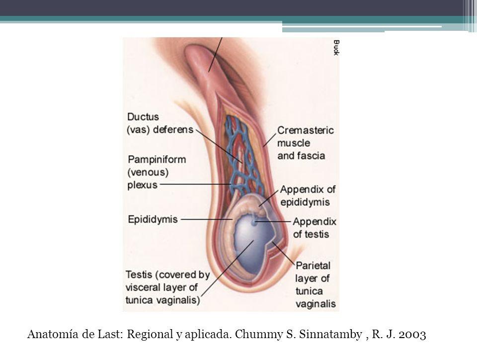 Cuadro clínico: - Dolor escrotal de inicio gradual.
