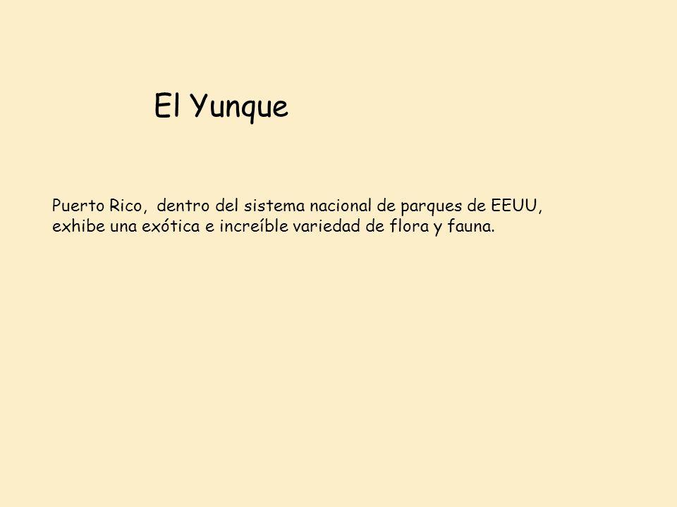 El Yunque Puerto Rico, dentro del sistema nacional de parques de EEUU, exhibe una exótica e increíble variedad de flora y fauna.
