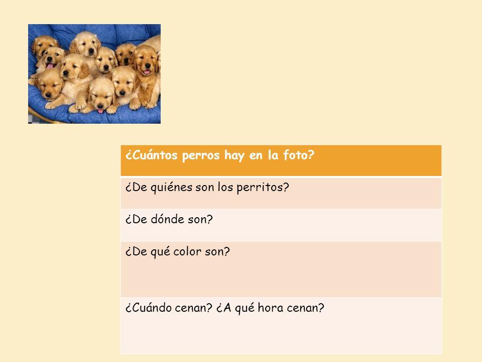 ¿Cuántos perros hay en la foto? ¿De quiénes son los perritos? ¿De dónde son? ¿De qué color son? ¿Cuándo cenan? ¿A qué hora cenan?