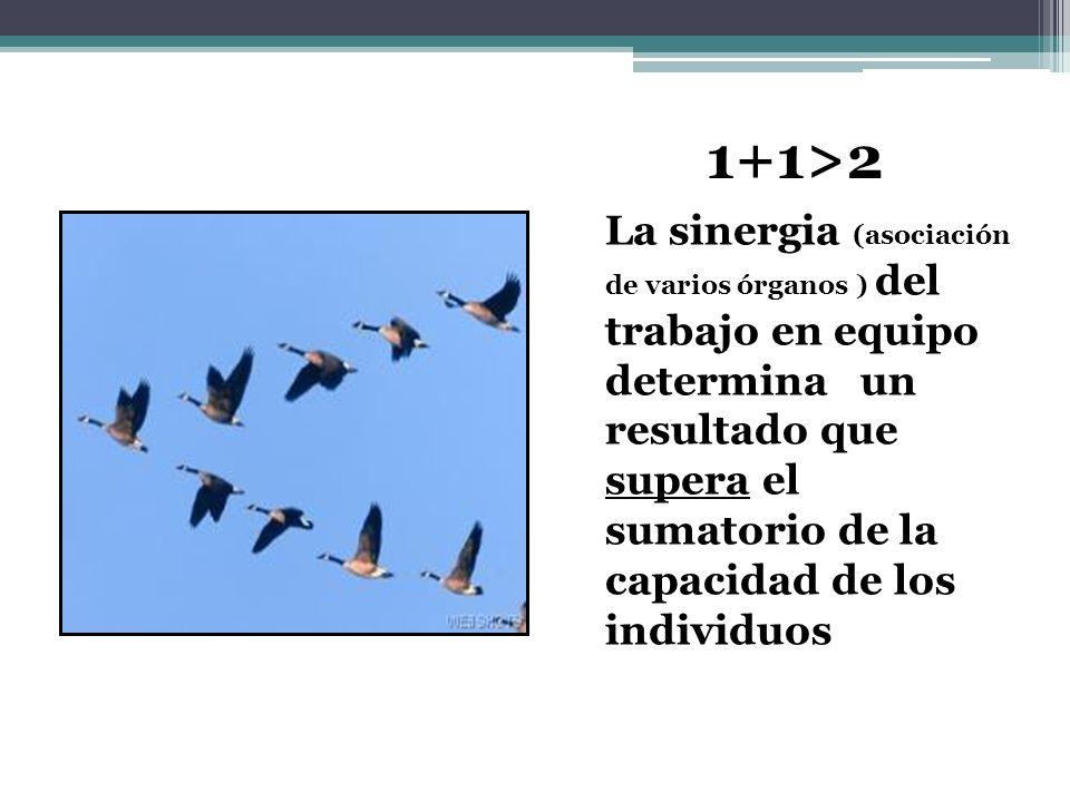 La sinergia (asociación de varios órganos ) del trabajo en equipo determina un resultado que supera el sumatorio de la capacidad de los individuos 1+1>2