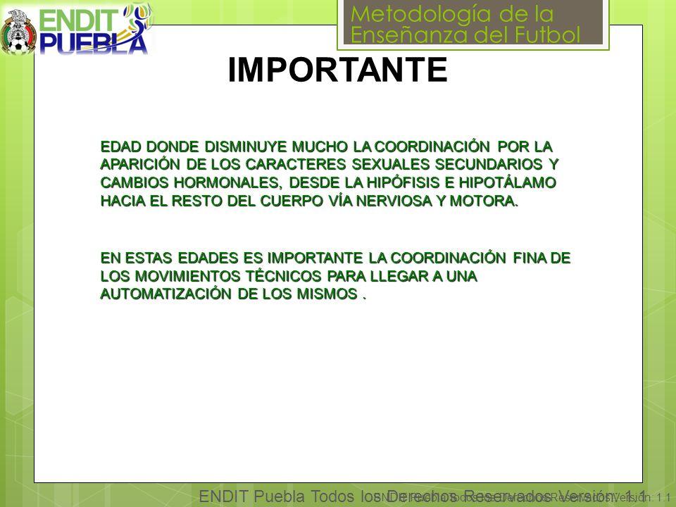 Metodología de la Enseñanza del Futbol ENDIT Puebla Todos los Derechos Reservados Versión: 1.1 IMPORTANTE EDAD DONDE DISMINUYE MUCHO LA COORDINACIÓN POR LA APARICIÓN DE LOS CARACTERES SEXUALES SECUNDARIOS Y CAMBIOS HORMONALES, DESDE LA HIPÓFISIS E HIPOTÁLAMO HACIA EL RESTO DEL CUERPO VÍA NERVIOSA Y MOTORA.