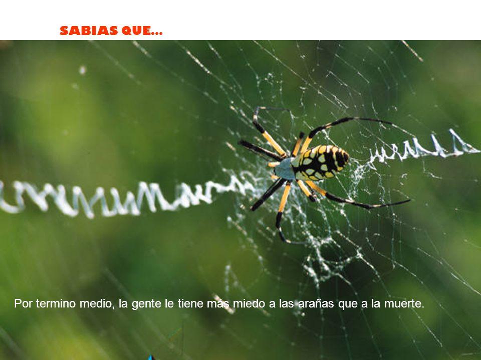 SABIAS QUE… La hormiga puede levantar 50 veces su peso, arrastrar 30 veces su propio peso y siempre cae sobre su costado derecho cuando sufre una into
