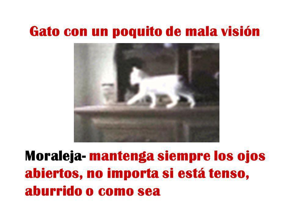 Gato con un poquito de mala visión Moraleja- mantenga siempre los ojos abiertos, no importa si está tenso, aburrido o como sea