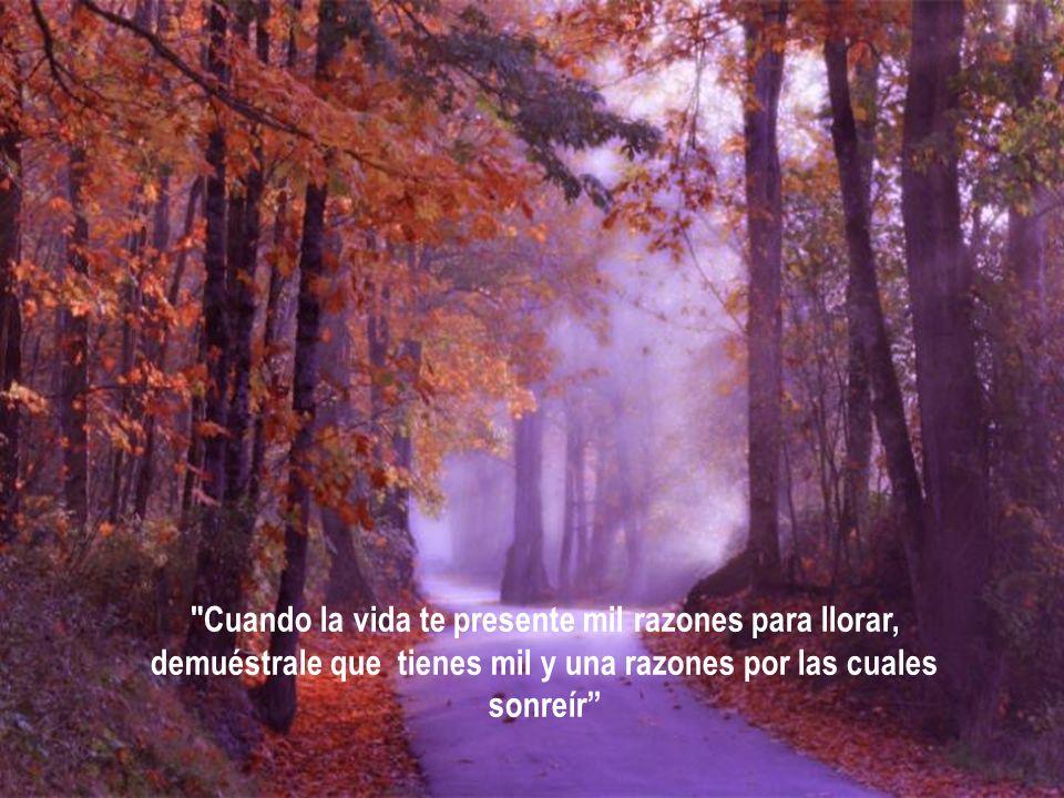 Dios no te prometió días sin dolor, risa sin tristeza, sol sin lluvia, pero él sí prometió fuerzas para cada día, consuelo para las lágrimas, y luz pa