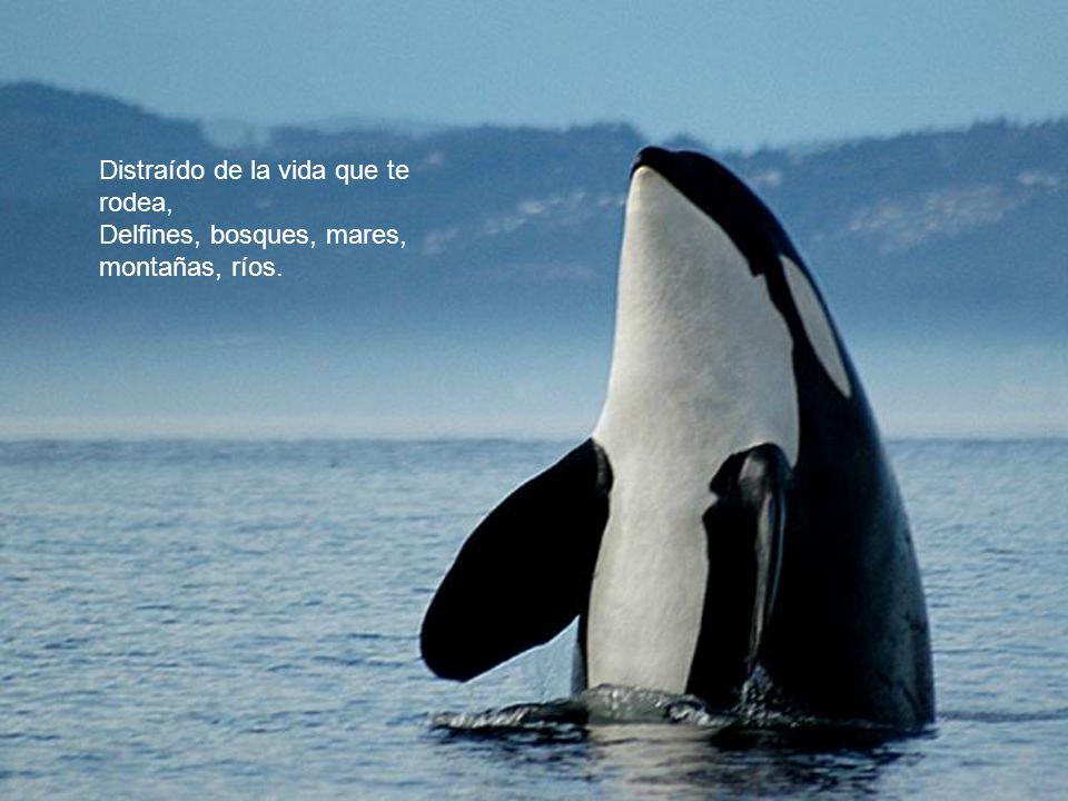 Distraído de la vida que te rodea, Delfines, bosques, mares, montañas, ríos.