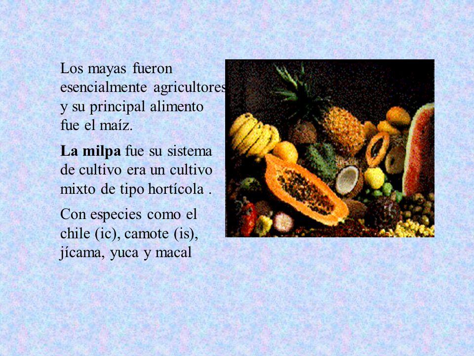 Los mayas fueron esencialmente agricultores y su principal alimento fue el maíz. La milpa fue su sistema de cultivo era un cultivo mixto de tipo hortí