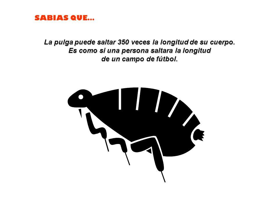 SABIAS QUE… Los osos polares son zurdos.
