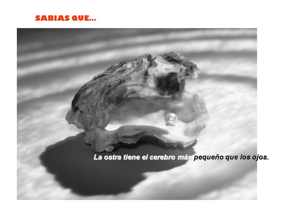 SABIAS QUE… La mantis religiosa macho, no puede copular mientras tenga la cabeza unida a su cuerpo. La hembra inicia el acto sexual, arrancando la cab