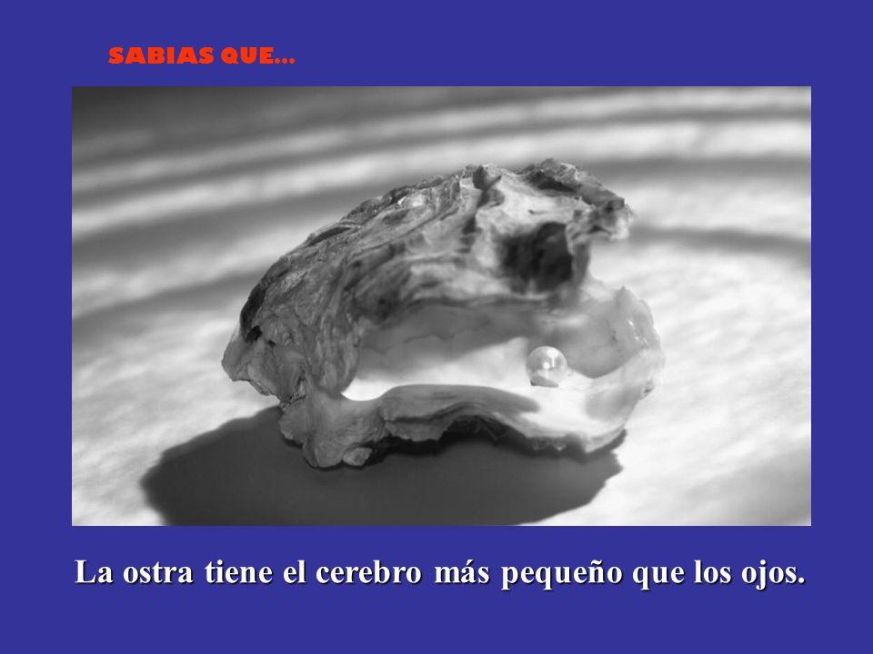 SABIAS QUE… La mantis religiosa macho no puede copular mientras tenga la cabeza unida a su cuerpo. La hembra inicia el acto sexual arrancando la cabez
