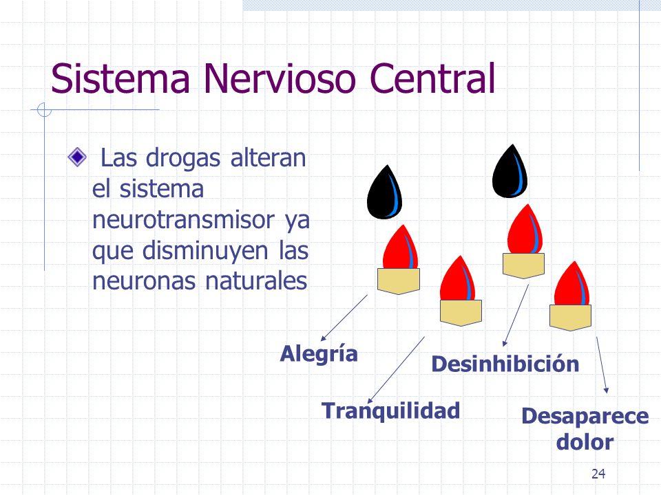 24 Sistema Nervioso Central Las drogas alteran el sistema neurotransmisor ya que disminuyen las neuronas naturales Alegría Tranquilidad Desinhibición Desaparece dolor