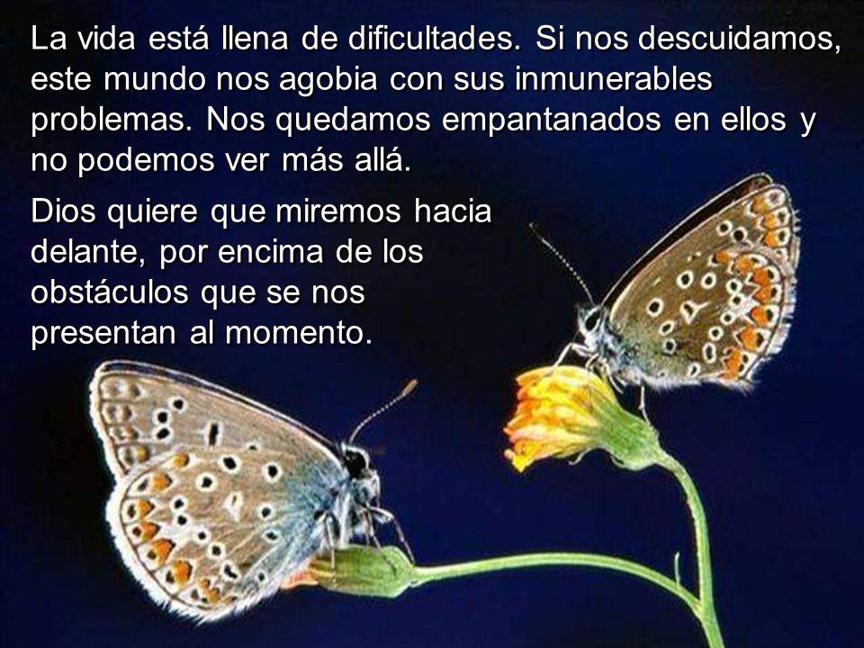 La vida está llena de dificultades. Si nos descuidamos, este mundo nos agobia con sus inmunerables problemas. Nos quedamos empantanados en ellos y no