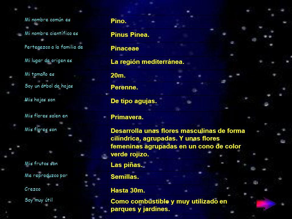 Mi nombre común es Pino.Mi nombre científico es Pinus Pinea.