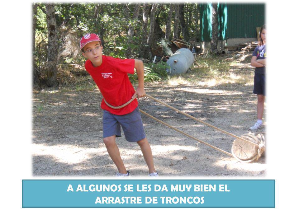 A ALGUNOS SE LES DA MUY BIEN EL ARRASTRE DE TRONCOS